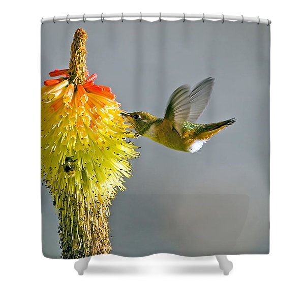 Birds and Bees Shower Curtain by Mike  Dawson