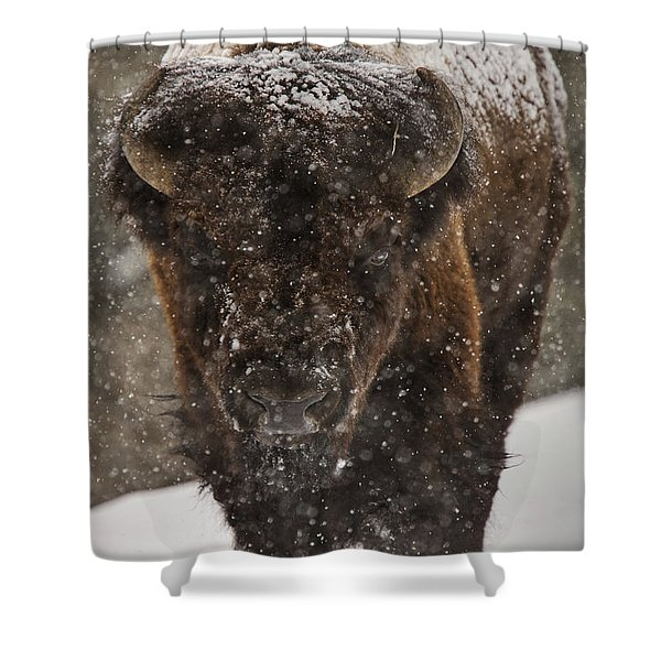 Bison Buffalo Wyoming Yellowstone Shower Curtain by Mark Duffy