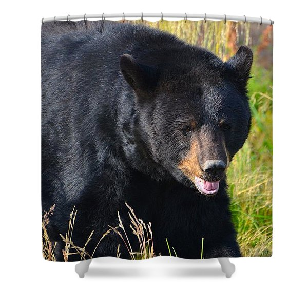 Black Bear Shower Curtain by Peggy Campbell