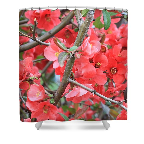Blossoms Branches And Thorns Shower Curtain by Carol Groenen