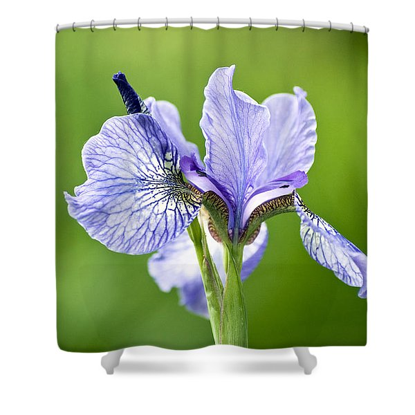 Blue Iris Germanica Shower Curtain by Frank Tschakert