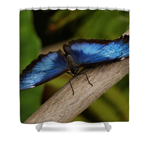 Blue Morpho Butterfly Shower Curtain by Sandy Keeton
