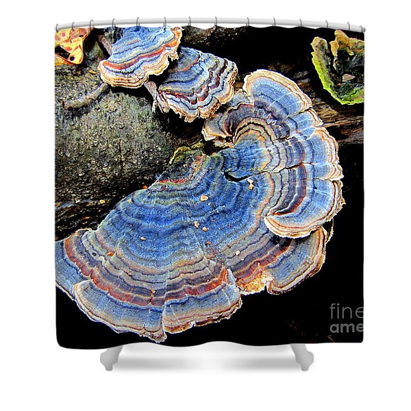 Blue Turkeytail Fungi Shower Curtain by Joshua Bales