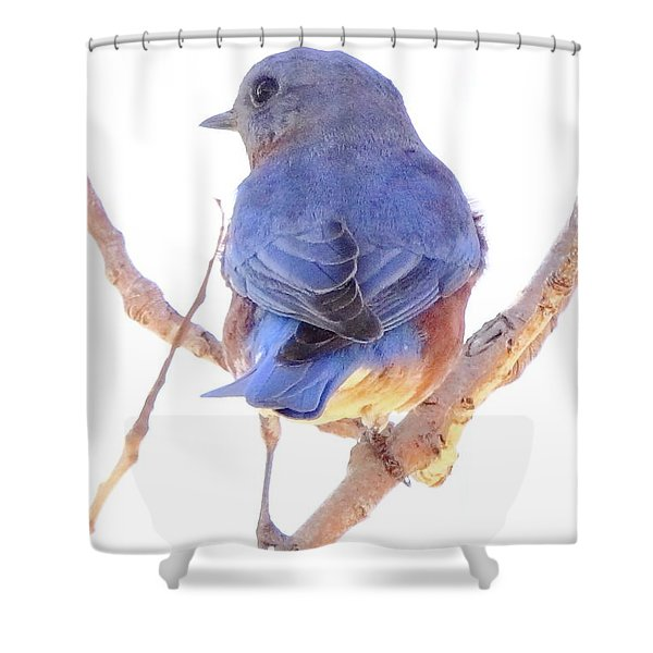 Bluebird On White Shower Curtain by Robert Frederick
