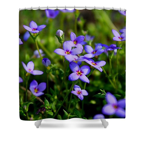 Bluets Shower Curtain by Kathryn Meyer