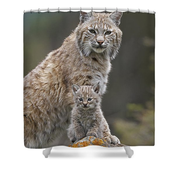 Bobcat Mother And Kitten North America Shower Curtain by Tim Fitzharris