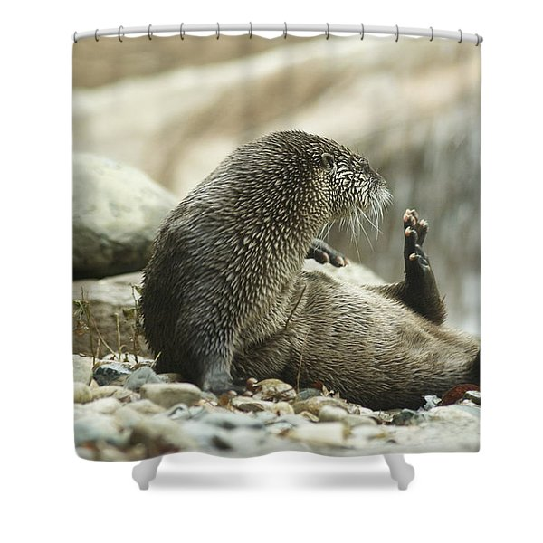 Break Time Shower Curtain by Michael Peychich