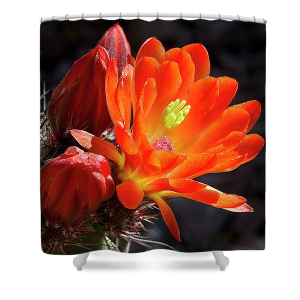 Bright Tangerine Cactus Flower Shower Curtain by Phyllis Denton