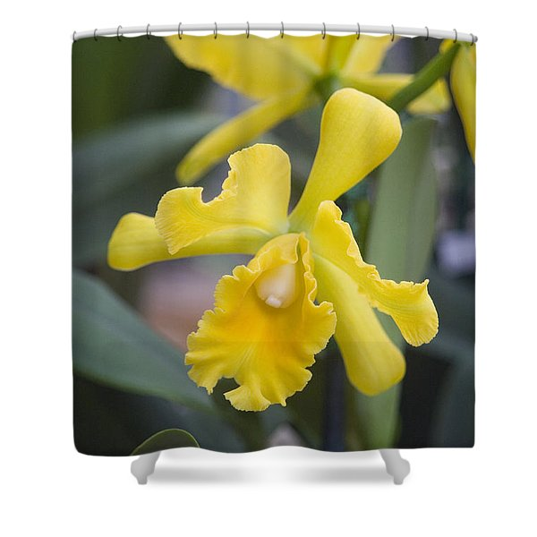 Bright yellow cattleya orchid Shower Curtain by Allan Seiden - Printscapes