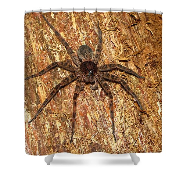 Brown Fishing Spider Shower Curtain by Joshua Bales