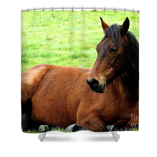 Brown Horse At Rest . R5906 Shower Curtain by Wingsdomain Art and Photography