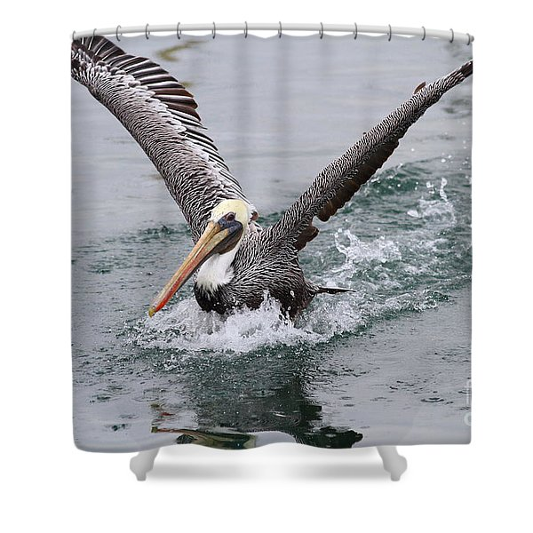 Brown Pelican Landing On Water . 7D8372 Shower Curtain by Wingsdomain Art and Photography