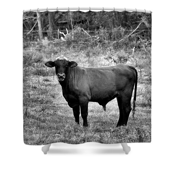 Brutus2 Shower Curtain by Jan Amiss Photography