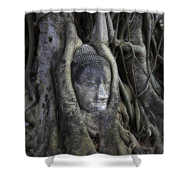 Buddha Head in Tree Shower Curtain by Adrian Evans