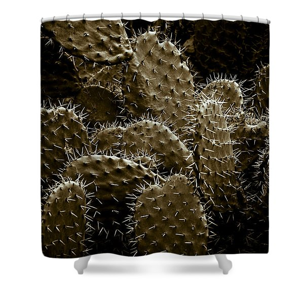 - Cactaceae Shower Curtain by Frank Tschakert