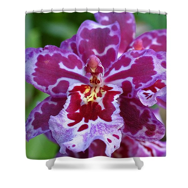 Cambria Orchid Shower Curtain by Juergen Roth