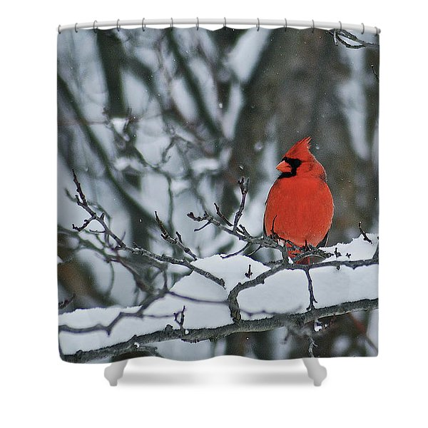 Cardinal and snow Shower Curtain by Michael Peychich