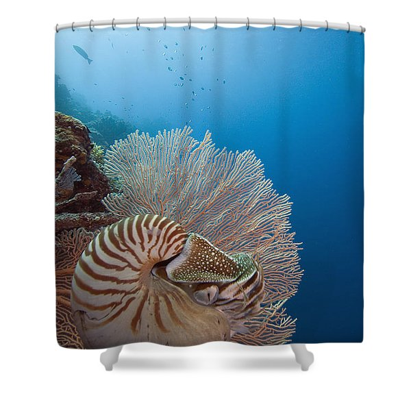 Chambered Nautilus Shower Curtain by Dave Fleetham - Printscapes