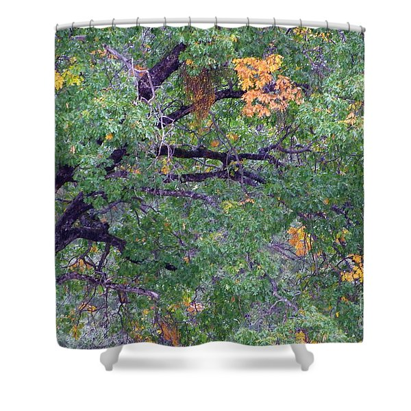 Changing of the Seasons Shower Curtain by Mary Deal
