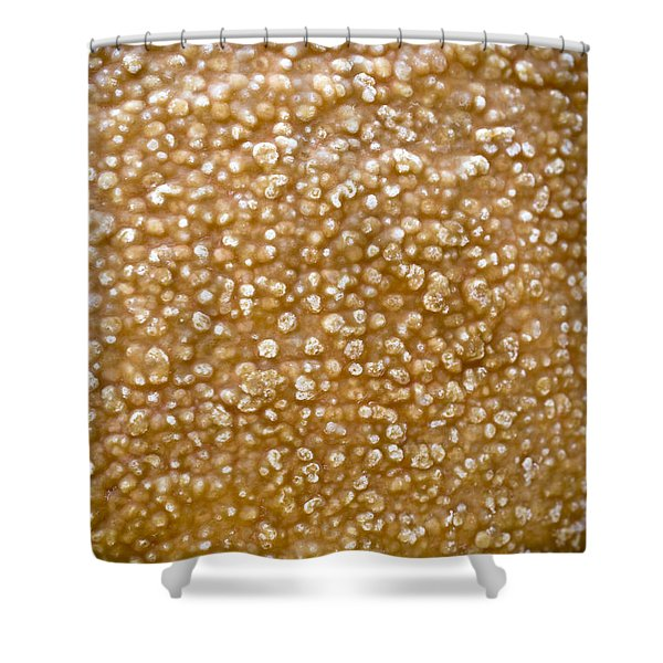 - Cheese Rind Shower Curtain by Frank Tschakert