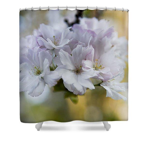 Cherry blossoms Shower Curtain by Frank Tschakert