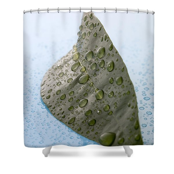 Citrus Leaf Shower Curtain by Frank Tschakert