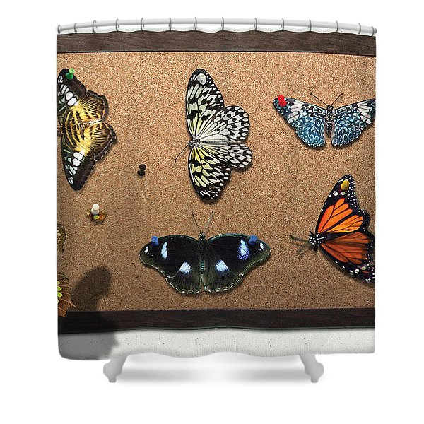 Collector - Lepidopterist - My Butterfly Collection Shower Curtain by Mike Savad