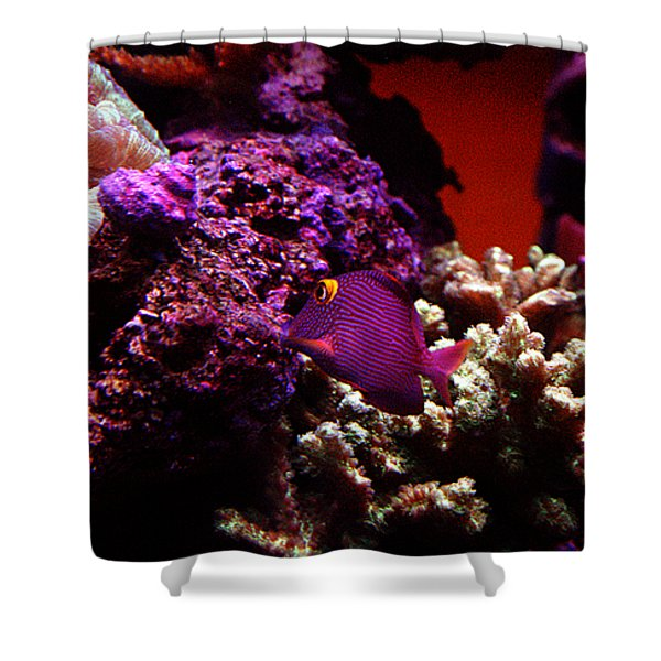 Colors of Underwater Life Shower Curtain by Clayton Bruster