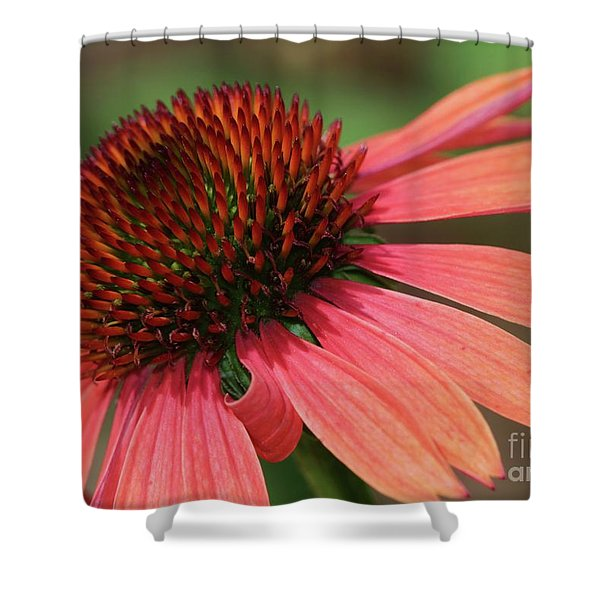 Coral Cone Flower Shower Curtain by Sabrina L Ryan