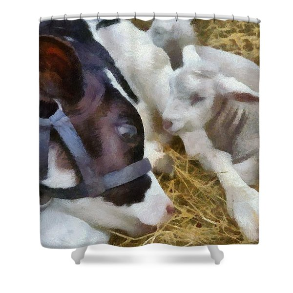 Cow And Lambs Shower Curtain by Michelle Calkins