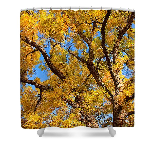 Crisp Autumn Day Shower Curtain by James BO  Insogna