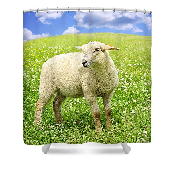 Cute young sheep Shower Curtain by Elena Elisseeva