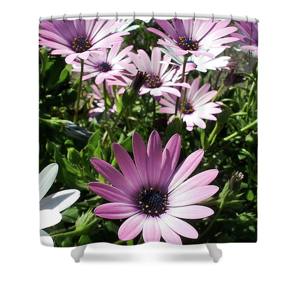 Daisy Patch Shower Curtain by Kaye Menner