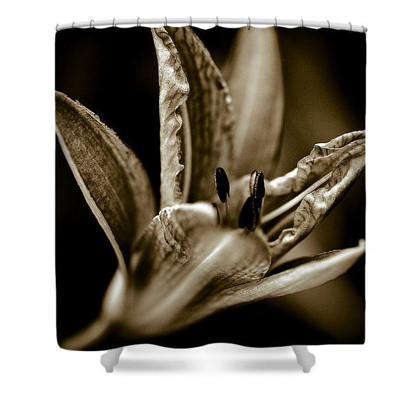 - Daylily Shower Curtain by Frank Tschakert