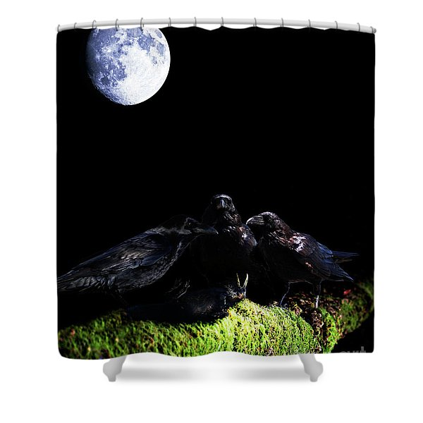 Death of a Young Raven Shower Curtain by Wingsdomain Art and Photography