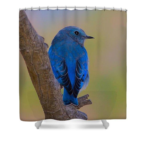 Deep Blue Shower Curtain by Shane Bechler