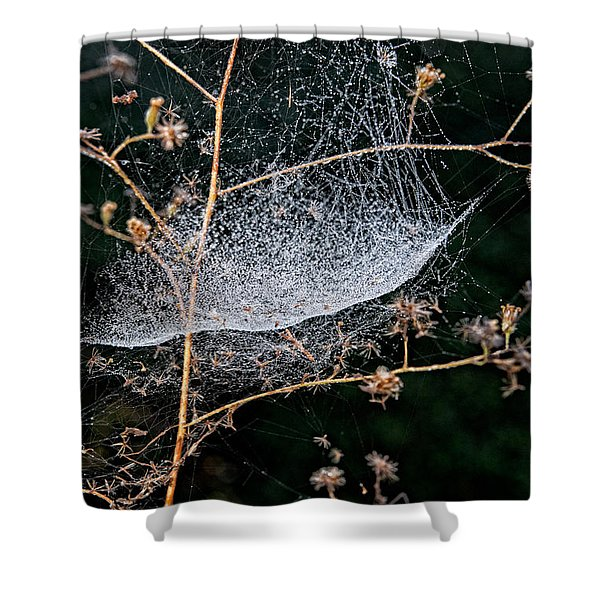 Dew Drenched Shower Curtain by Christopher Holmes