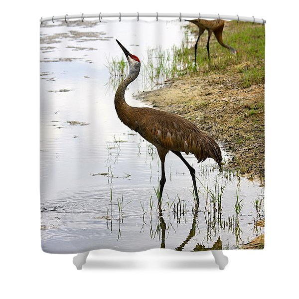 Dip in the Pond Shower Curtain by Carol Groenen