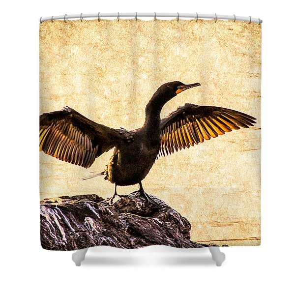 Double-crested Cormorant Shower Curtain by Bob Orsillo