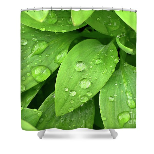 Drops On Leaves Shower Curtain by Carlos Caetano