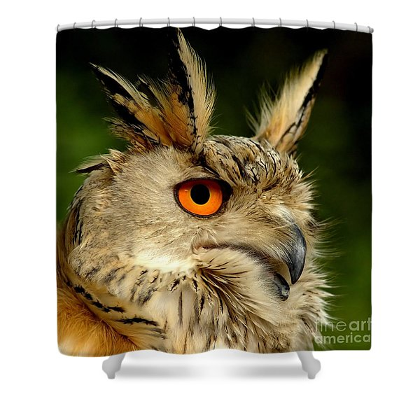Eagle Owl Shower Curtain by Photodream Art