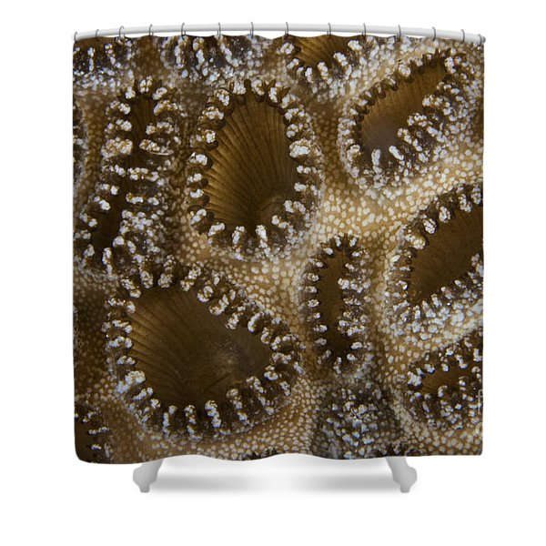 Extreme Close-up Of A Crust Anemone Shower Curtain by Terry Moore