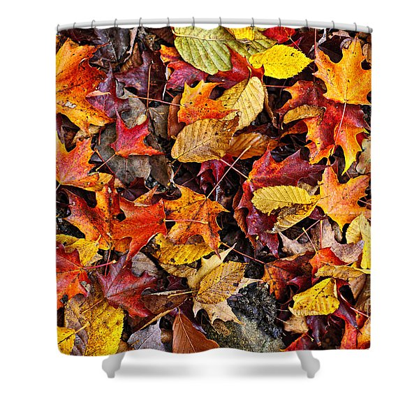 Fall leaves background Shower Curtain by Elena Elisseeva