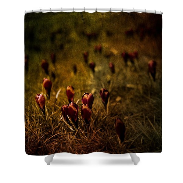 Fields Of Elegance Shower Curtain by Loriental Photography