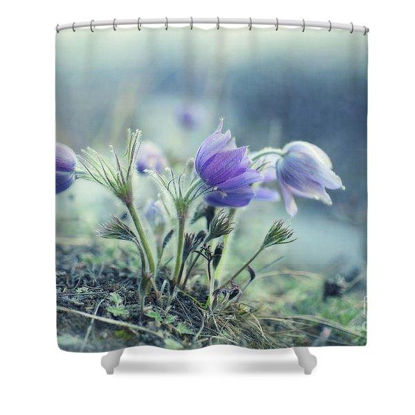 finally spring Shower Curtain by Priska Wettstein