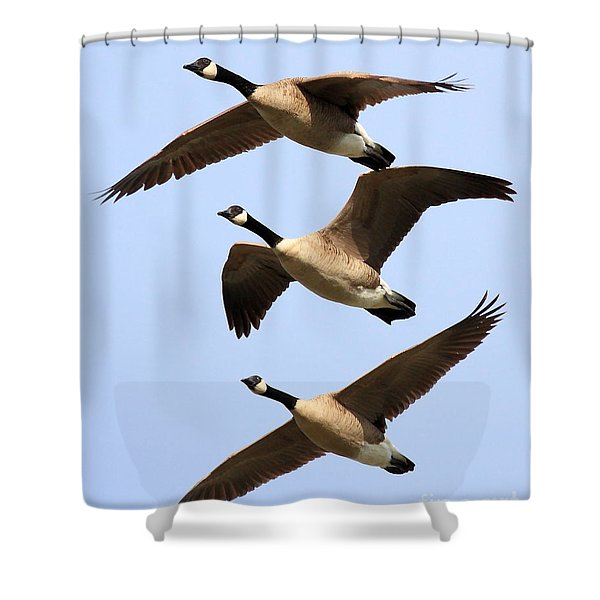 Flight of Three Geese Shower Curtain by Wingsdomain Art and Photography