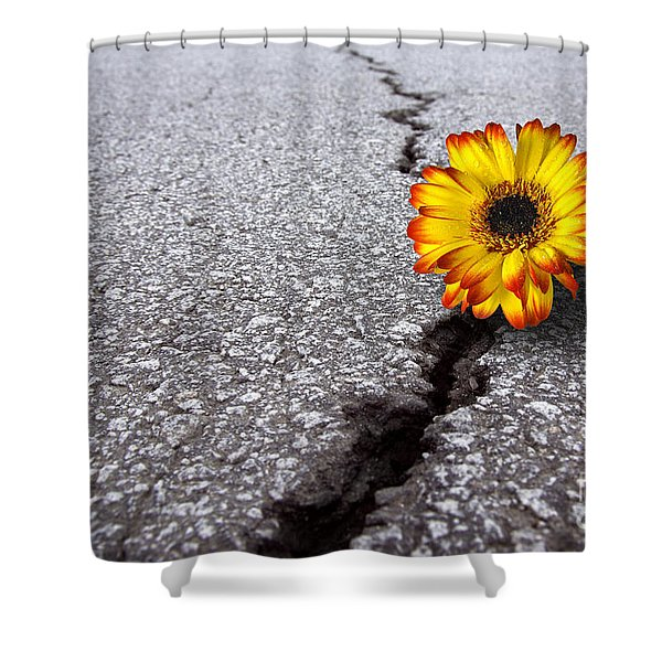 Flower in asphalt Shower Curtain by Carlos Caetano