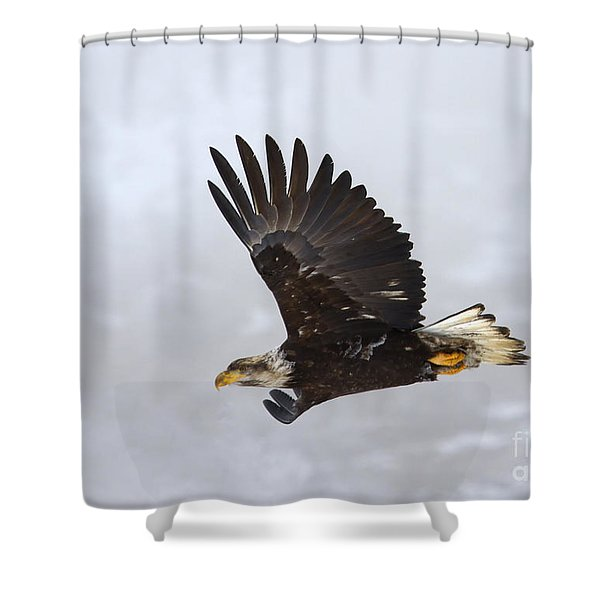 Foggy Flight Shower Curtain by Mike  Dawson