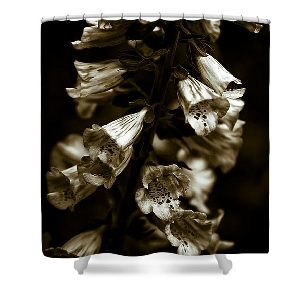 - Foxglove Flowers Shower Curtain by Frank Tschakert