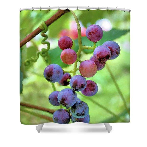 Fruit of the Vine Shower Curtain by Kristin Elmquist